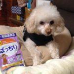 犬の健康食品